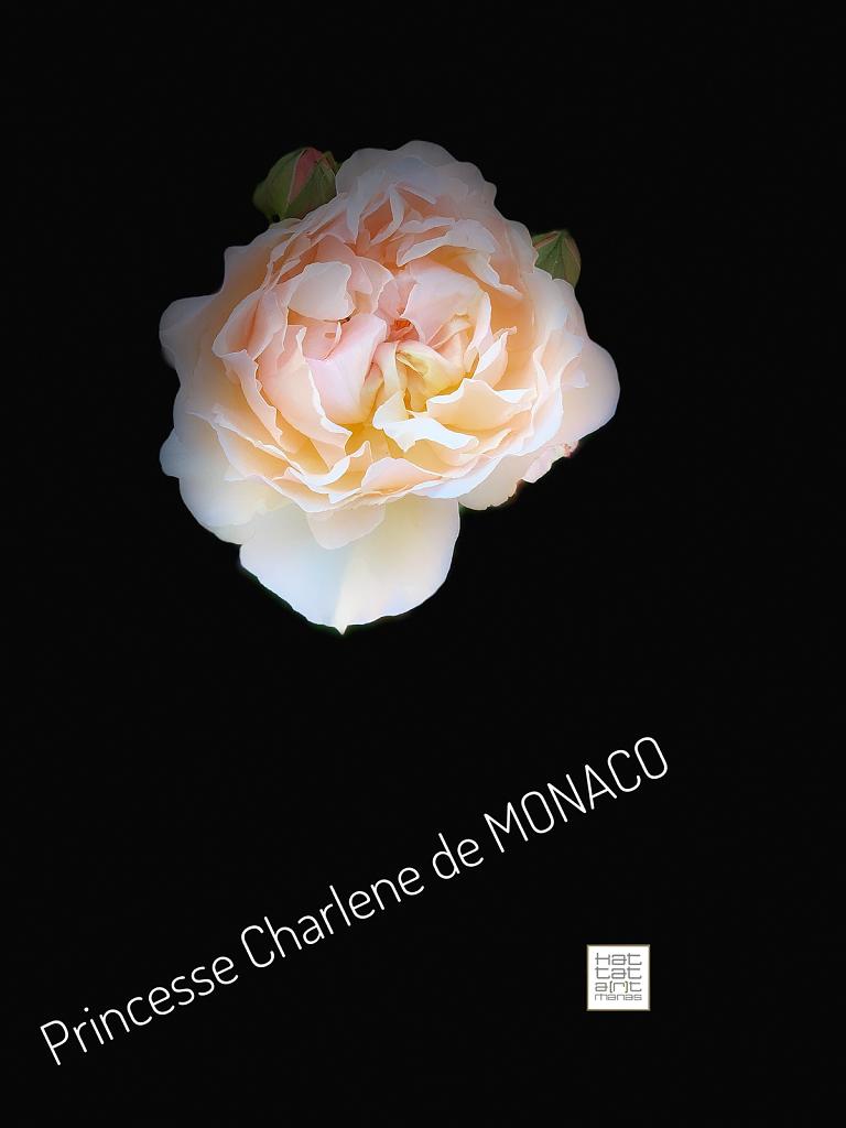 princesse Charlene de  Monaco
