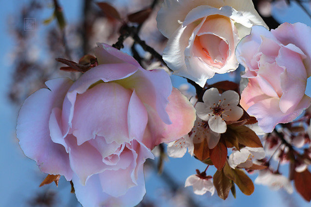 flower composit
