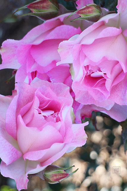 princess grace garden