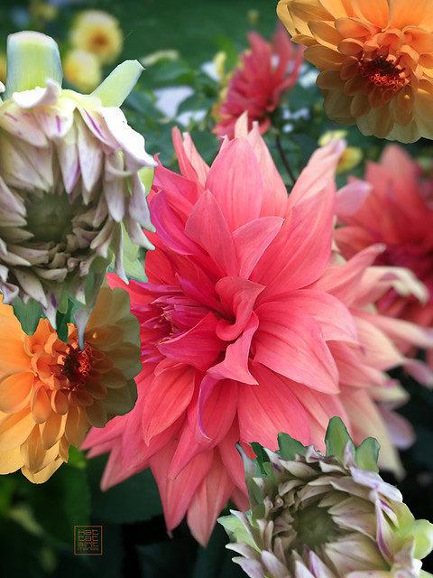 flowercomposition #2