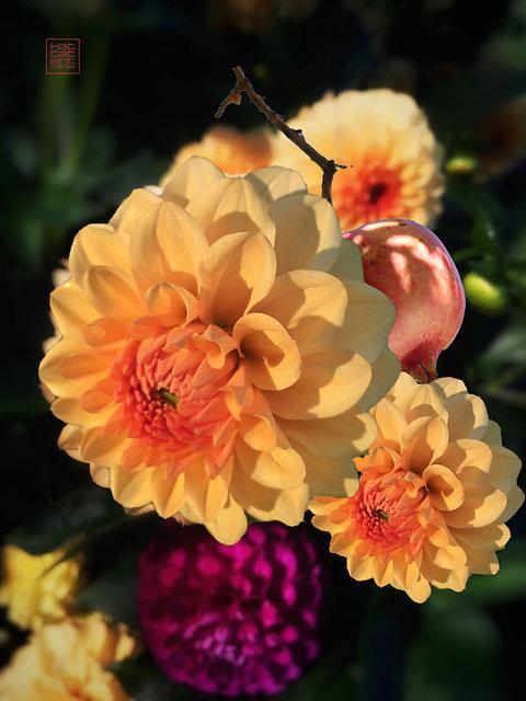 flowercomposition #1